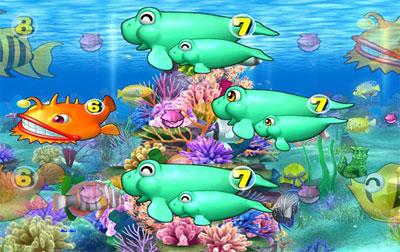 珊瑚礁系リーチ